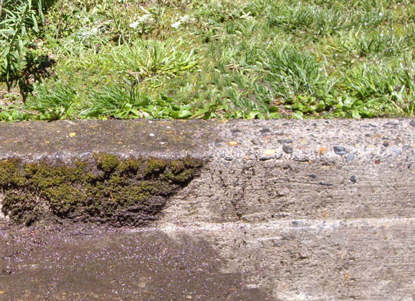 Removing slippery slimy moss for safety, showing before and after